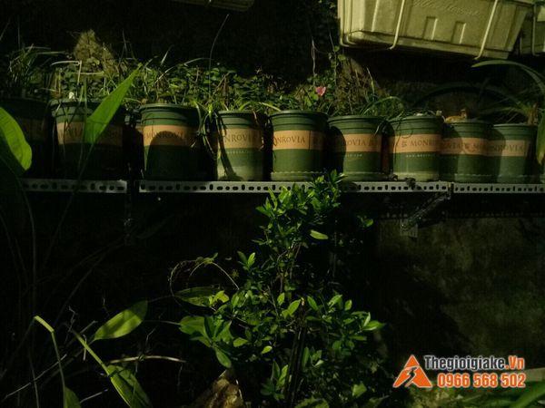 Kệ sắt V trồng rau sạch tại Hà Nội